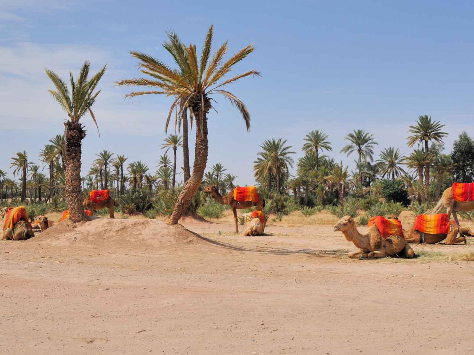 Location villa Marrakech Palmeraie